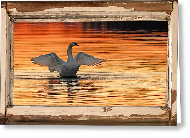 Swans At Dawn Greeting Cards - Red Dawn Swan framed in old window frame Greeting Card by Randall Branham