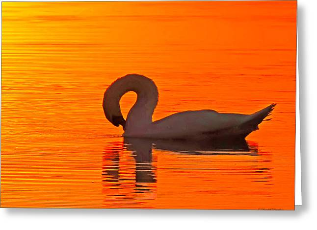 Swans At Dawn Greeting Cards - Red Dawn Swan Greeting Card by Randall Branham