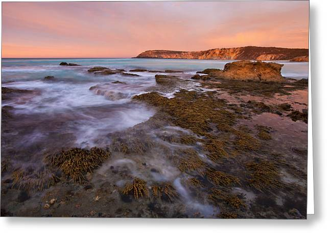 Kangaroo Island Greeting Cards - Red Dawning Greeting Card by Mike  Dawson