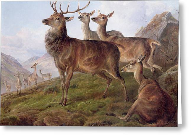 Red Deer Greeting Cards - Red Deer in a Highland Landscape Greeting Card by Charles Jones