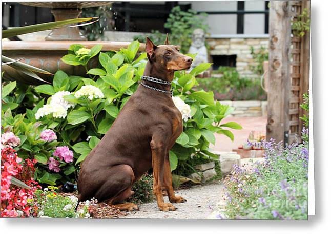 Doby Greeting Cards - Red Doberman in Church Garden Greeting Card by Renae Laughner