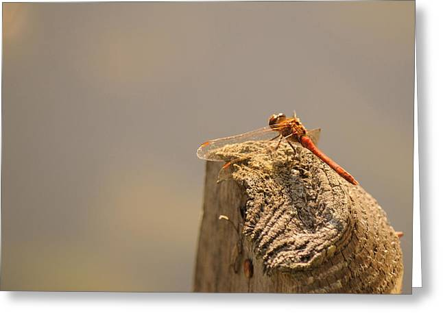 Y Wing Greeting Cards - Red Dragonfly Greeting Card by Paolo Marini