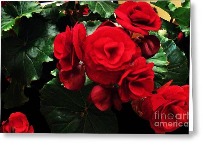 Hanging Baskets Greeting Cards - Red Ever Blooming Greeting Card by Marsha Heiken