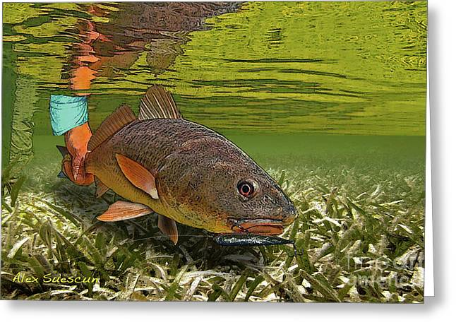 Fly Fishing Drawings Greeting Cards - Red Eye Greeting Card by Alex Suescun
