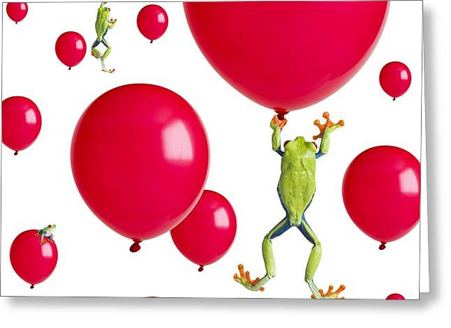 Red-eyed Treefrogs Floating On Red Greeting Card by Corey Hochachka