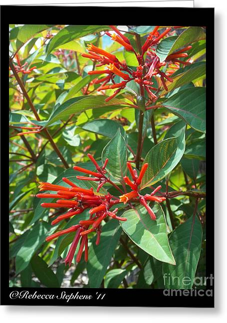 Georgia Greeting Cards - Red Flora Greeting Card by Rebecca  Stephens