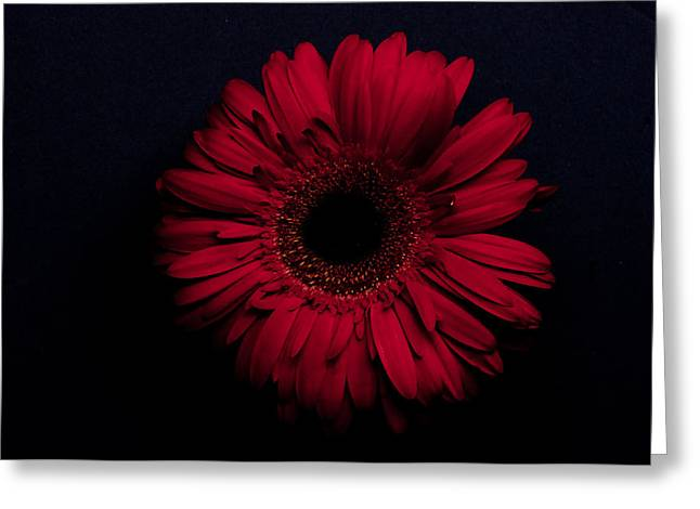 Red Flower Greeting Card by Ron Smith