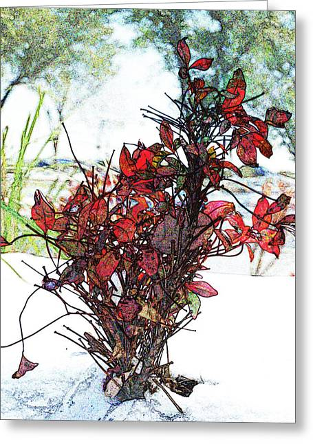 Red Leaves Digital Art Greeting Cards - Red For The Winter Greeting Card by James Granberry