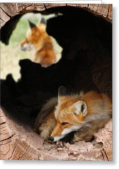 Red Fox Dreaming Greeting Card by Ernie Echols