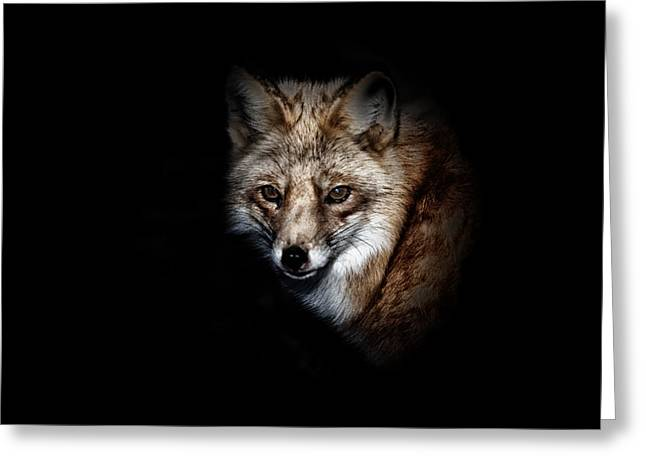 Wildlife Preserve Greeting Cards - Red Fox Greeting Card by Karol  Livote
