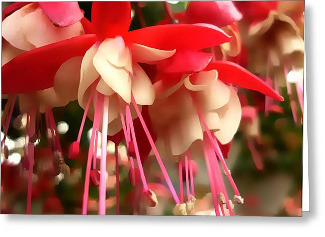 Red Fuschia Greeting Card by Jeff Breiman