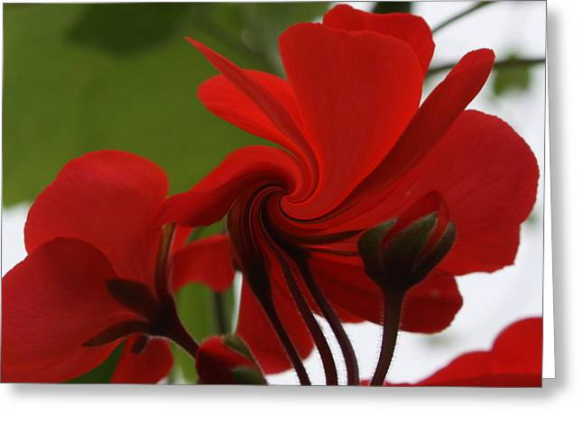 Red Geraniums Photographs Greeting Cards - Red Geranium Abstract Greeting Card by Marjorie Imbeau