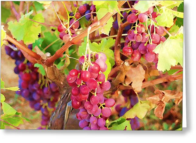 Greece Vineyards Greeting Cards - Red grapes 01 Greeting Card by Manolis Tsantakis