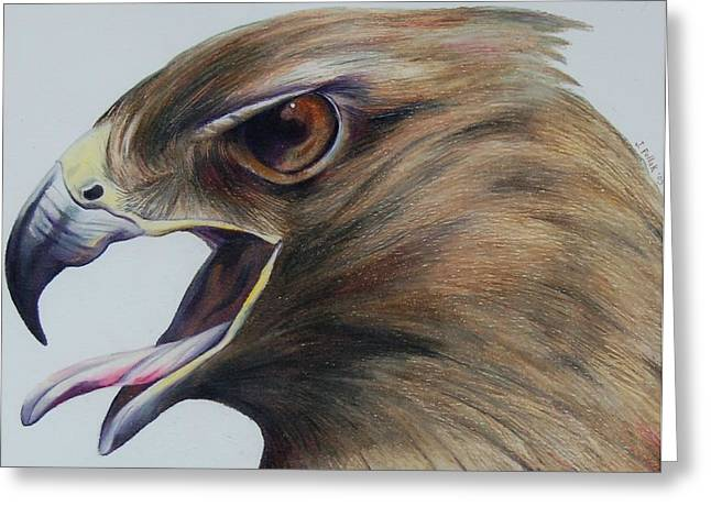 Swooping Drawings Greeting Cards - Red Hawk Greeting Card by Joan Pollak