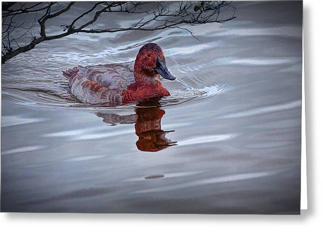 Water Fowl Greeting Cards - Red Headed Duck Greeting Card by Randall Nyhof