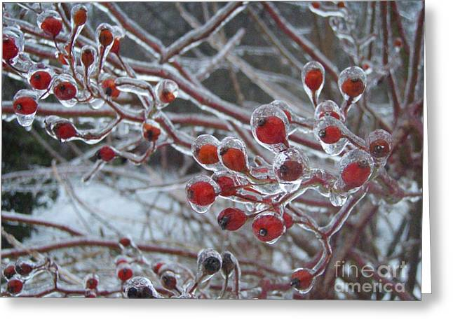 Red Ice Berries Greeting Card by Kristine Nora