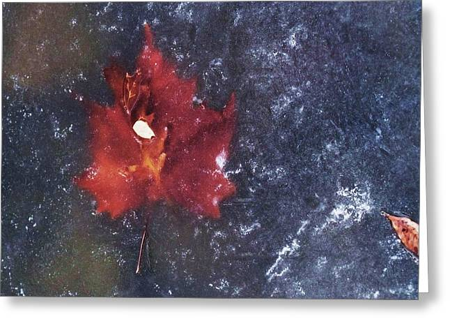 Red Leaf In Ice Greeting Card by Todd Sherlock