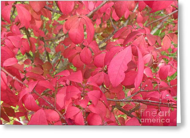 Red Leaves IIi Greeting Card by Alys Caviness-Gober