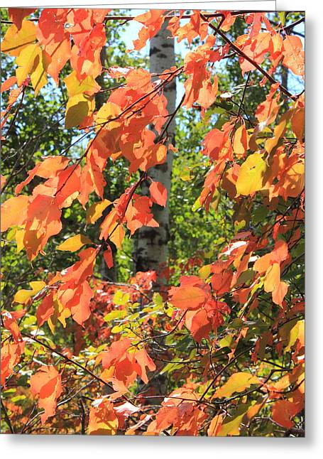 Red Leaves Of Autumn Greeting Card by Jim Sauchyn