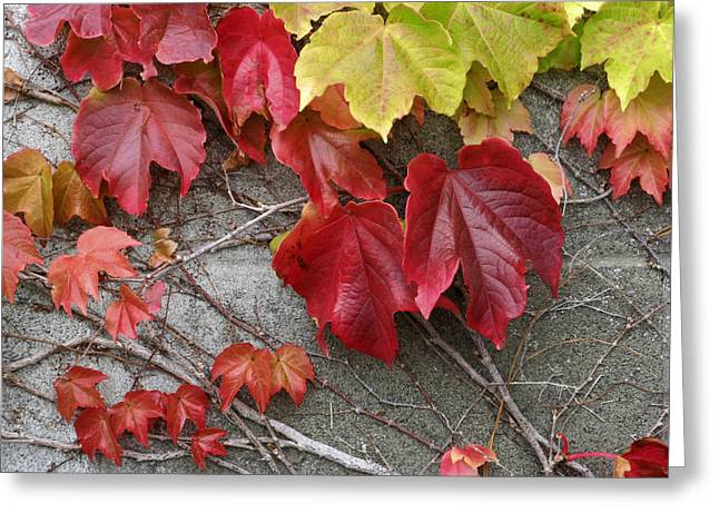 Red Leaves Greeting Cards - Red Leaves Stone Wall Greeting Card by Rich Franco