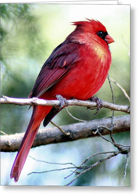Red Photographs Greeting Cards - Red Greeting Card by Lisa Scott