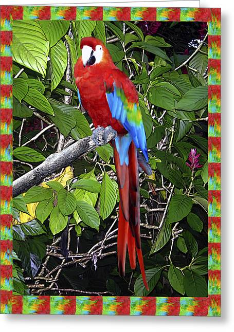 Parrot Digital Art Greeting Cards - Red Macaw Greeting Card by Kurt Van Wagner