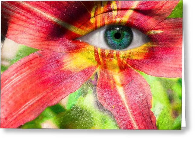 Eyebrow Greeting Cards - Red Magic Daylily Greeting Card by Semmick Photo