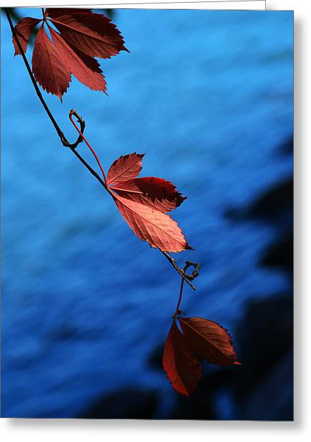 Period Digital Art Greeting Cards - Red maple leaves Greeting Card by Paul Ge