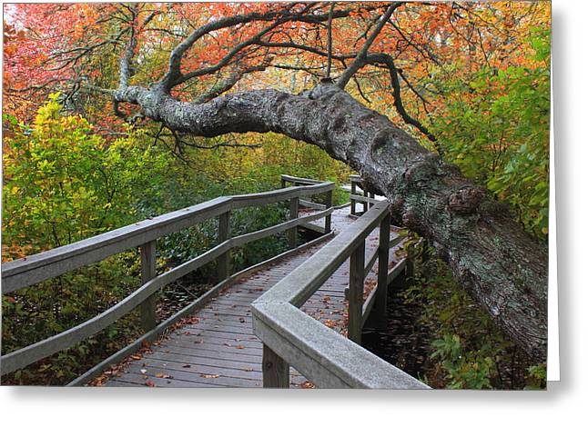 Cape Cod National Seashore Greeting Cards - Red Maple Swamp Cape Cod National Seashore Greeting Card by John Burk