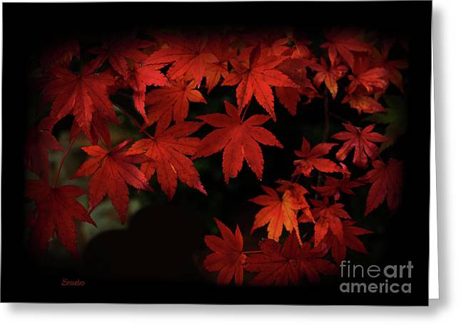 Red Leaves Greeting Cards - Red  Momiji Greeting Card by Eena Bo