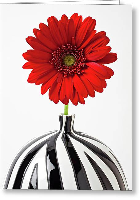 Mum Greeting Cards - Red mum in striped vase Greeting Card by Garry Gay