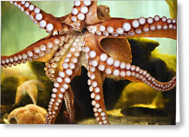 Aquariums Greeting Cards - Red Octopus Greeting Card by Marilyn Hunt
