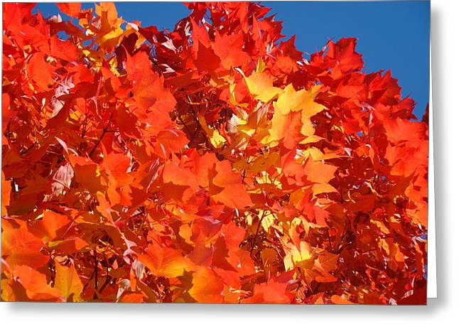 Autumn Art Greeting Cards - Red Orange Yellow Autumn Leaves art prints Vivid Bright Greeting Card by Baslee Troutman
