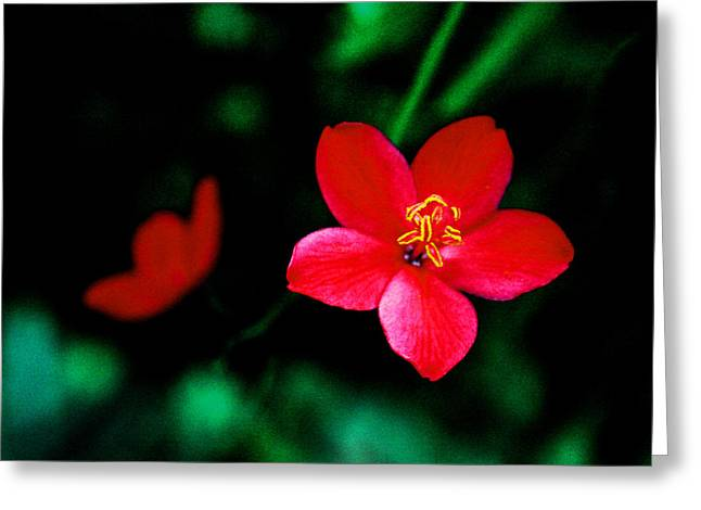 Abstract Water And Fall Leaves Greeting Cards - Red Petaled Dream Greeting Card by Jennifer  Bright