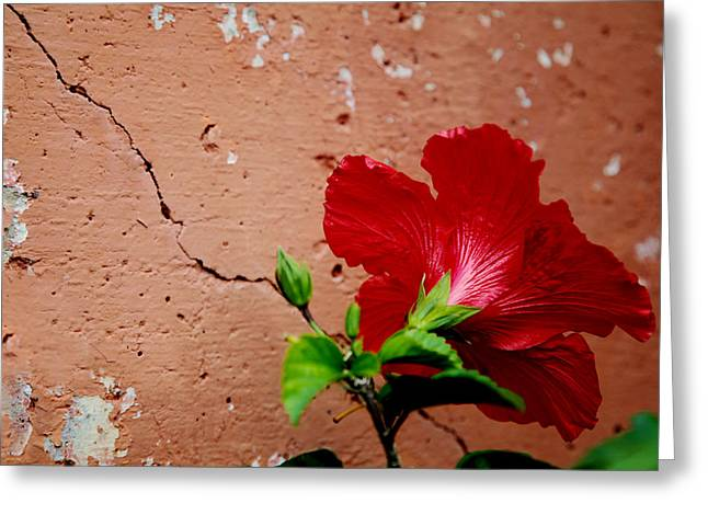 Floral Photographs Greeting Cards - Red Petals Greeting Card by Toni Hopper