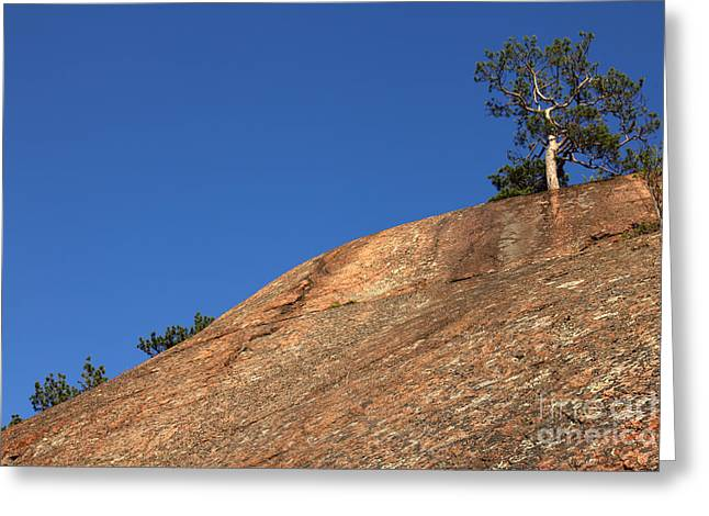 Growing Out Of Rock Greeting Cards - Red Pine Tree Greeting Card by Ted Kinsman