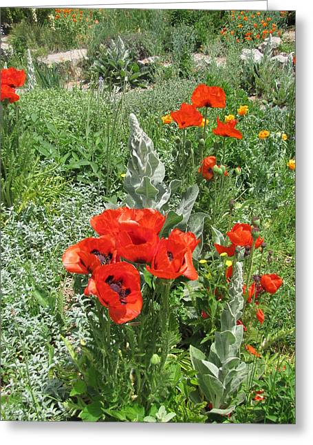 Shades Of Red Greeting Cards - Red Poppies Brilliant Day Greeting Card by Shawn Hughes