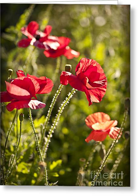 Red Petals Greeting Cards - Red poppies Greeting Card by Elena Elisseeva