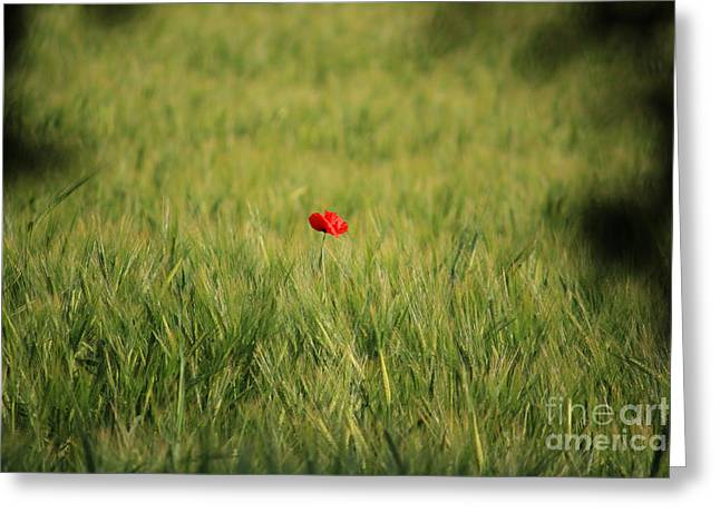 Photo Gifts Greeting Cards - Red Poppy in a field Greeting Card by Pixel Chimp