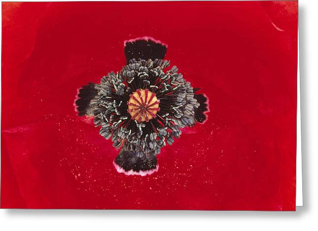 Framed Stamen Greeting Cards - Red Poppy Papaver Rhoeas Close Greeting Card by Duncan Usher