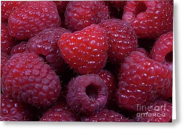 Sale Printing Greeting Cards - Red Raspberries Greeting Card by Michael Waters