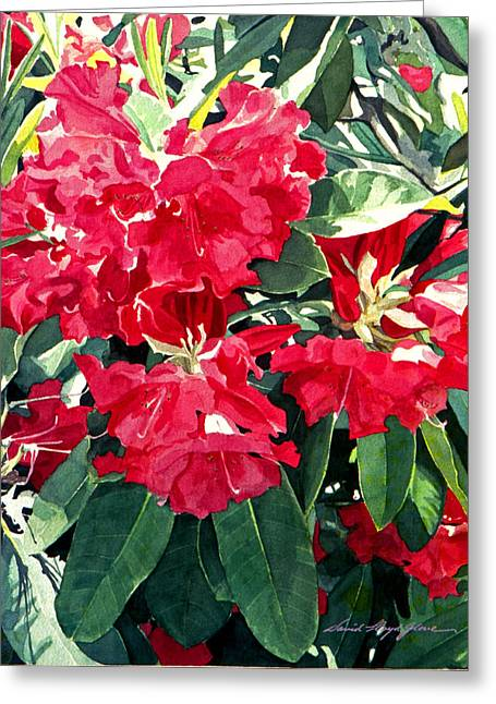 Rhododendrons Greeting Cards - Red Rhododendrons of Dundarave Greeting Card by David Lloyd Glover