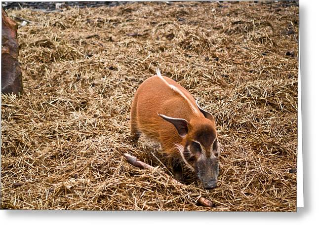 Red Hog Greeting Cards - Red River Greeting Card by Douglas Barnett