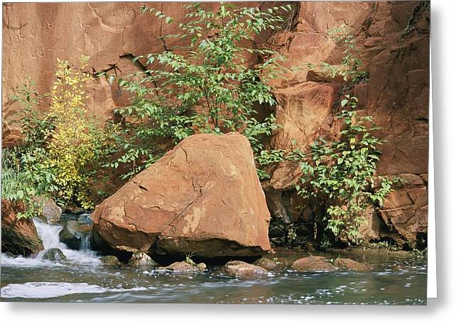 Oak Creek Greeting Cards - Red Rocks, Fall Colors And Creek, Oak Greeting Card by Rich Reid