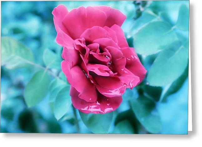 Debi Ling Greeting Cards - Red Rose Greeting Card by Debi Ling