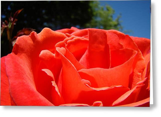 Mother Framed Prints Greeting Cards - Red Rose Flower Fine Art Prints Roses Garden Greeting Card by Baslee Troutman