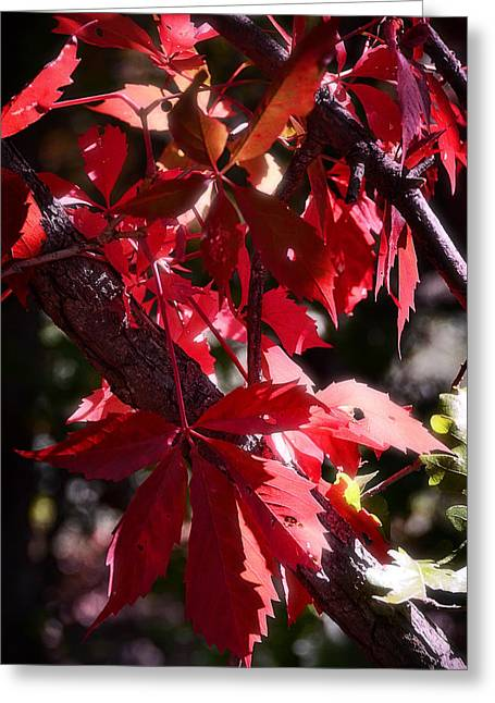 Red Leaves Greeting Cards - Red Greeting Card by Saija  Lehtonen