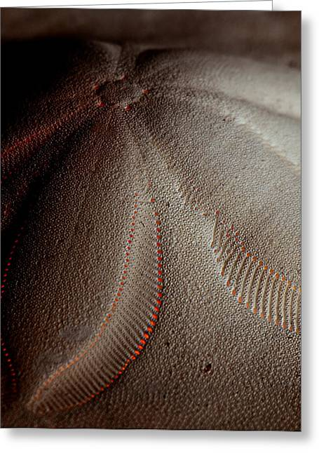 Studio Lighting Greeting Cards - Red Sand Greeting Card by Andrew Kubica