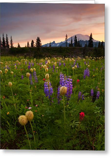 Mt. Rainier Greeting Cards - Red Sky Meadow Greeting Card by Mike  Dawson