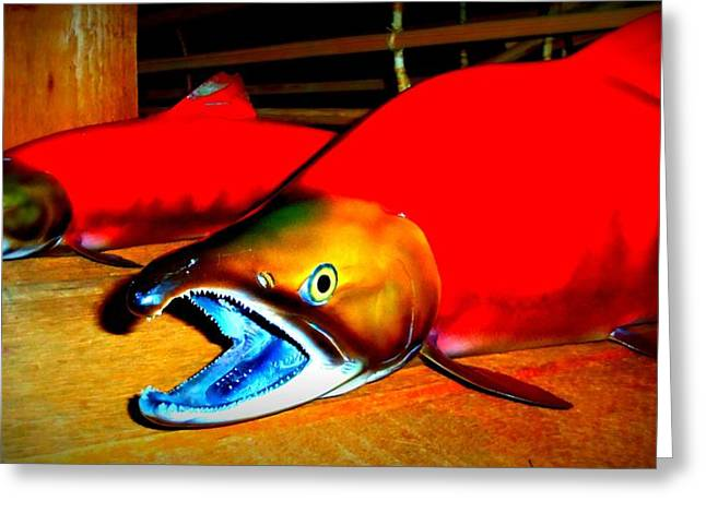 Red Snapper Greeting Cards - Red Snappers Greeting Card by Randall Weidner